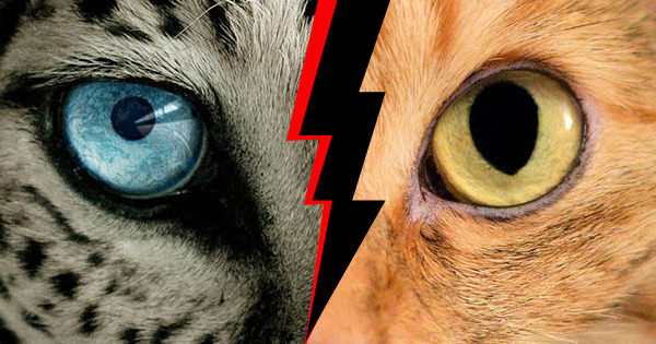 Which Animal Is Your Dark Side?