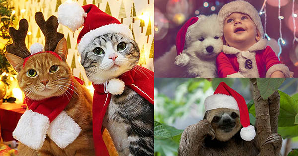 Which Christmas Animal Represents You?